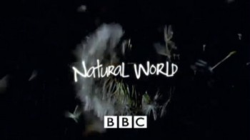 BBC Мир природы. Потрясающие лягушки  / The Natural World. Fabulous Frogs (2014)