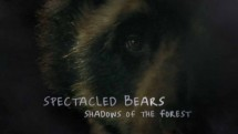 Очковые медведи: лесные тени / Spectacled Bears: Shadows of the Fores (2008)
